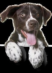 veterinário cachorro, veterinário para cachorro em curitiba, veterinário para dogs em curitiba, veterinário 24h em curitiba
