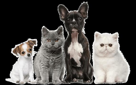 veterinário 24h poodle, veterinária 24hpoodle, veterináriopoodle, veterinariopoodle, veterinario 24hpoodle, veterinaria 24hpoodle, veterinario 24h em curitibapoodle, veterinário 24h em curitiba poodle, veterinária 24h em curitibapoodle, veterinaria 24h em curitiba poodle, veterinário 24h zwergspitz, veterinária 24hzwergspitz, veterináriozwergspitz, veterinariozwergspitz, veterinario 24hzwergspitz, veterinaria 24hzwergspitz, veterinario 24h em curitibazwergspitz, veterinário 24h em curitiba zwergspitz, veterinária 24h em curitibazwergspitz, veterinaria 24h em curitiba zwergspitz, veterinário 24h buldogue, veterinária 24hbuldogue, veterináriobuldogue, veterinariobuldogue, veterinario 24hbuldogue, veterinaria 24hbuldogue, veterinario 24h em curitibabuldogue, veterinário 24h em curitiba buldogue, veterinária 24h em curitibabuldogue, veterinaria 24h em curitiba buldogue, veterinário 24h yorkshire terrier, veterinária 24hyorkshire terrier, veterinárioyorkshire terrier, veterinarioyorkshire t