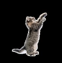 veterinária para gatos, clinica veterinária para gato 24h, clinica veterinária para gatos em curitiba, clinica veterinária gatos, veterinario para gato, veterinario gato