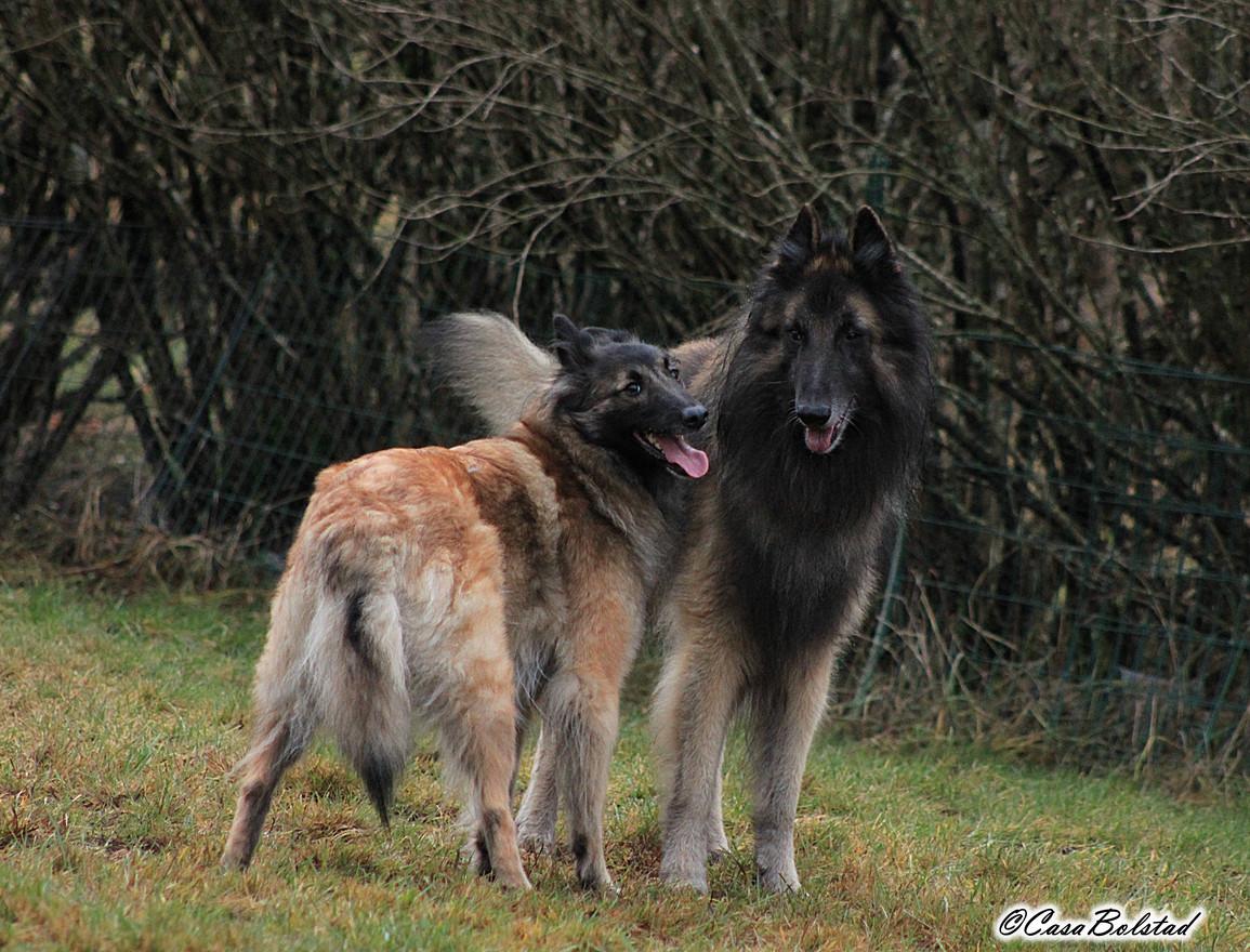 Akira & Flatter