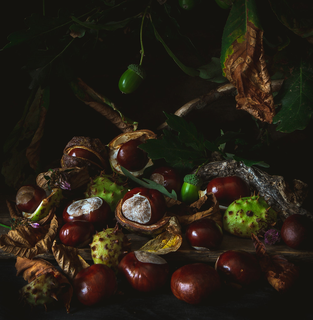 Autumn conkers in London