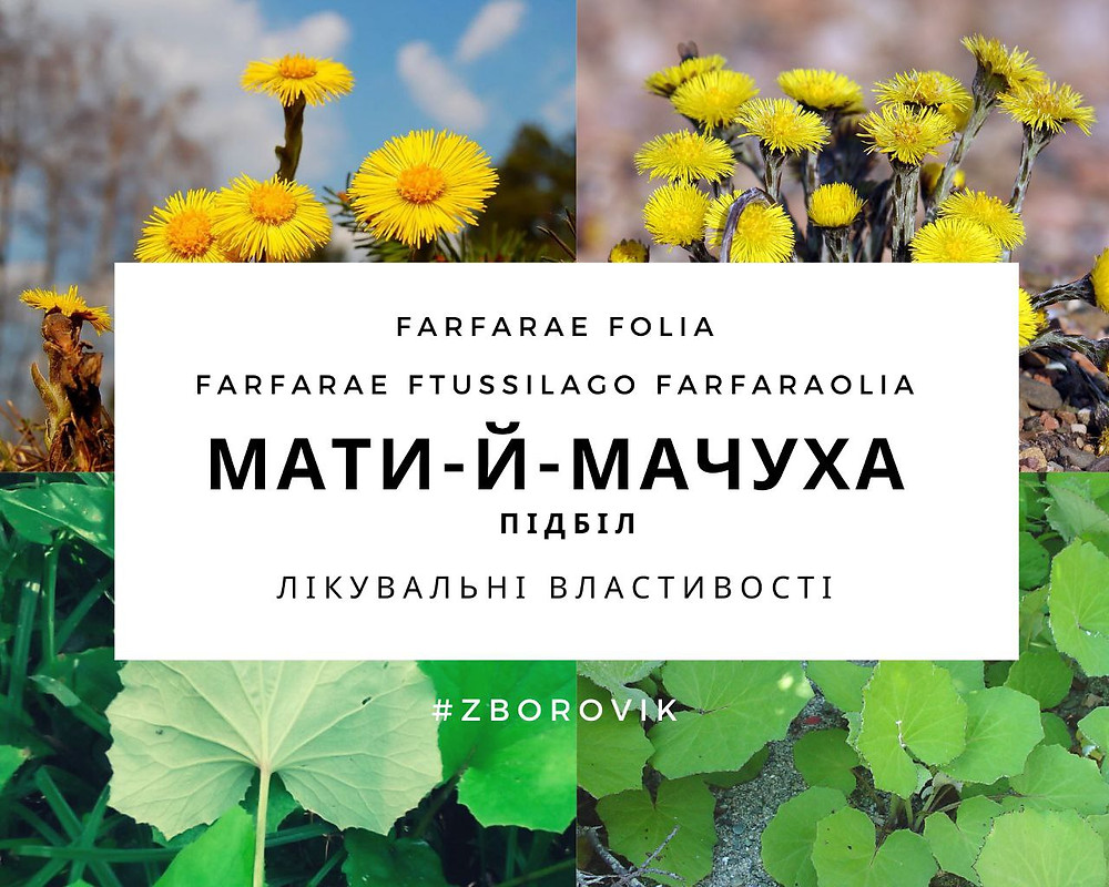 Мати-й-мачуха zborovik.com.ua