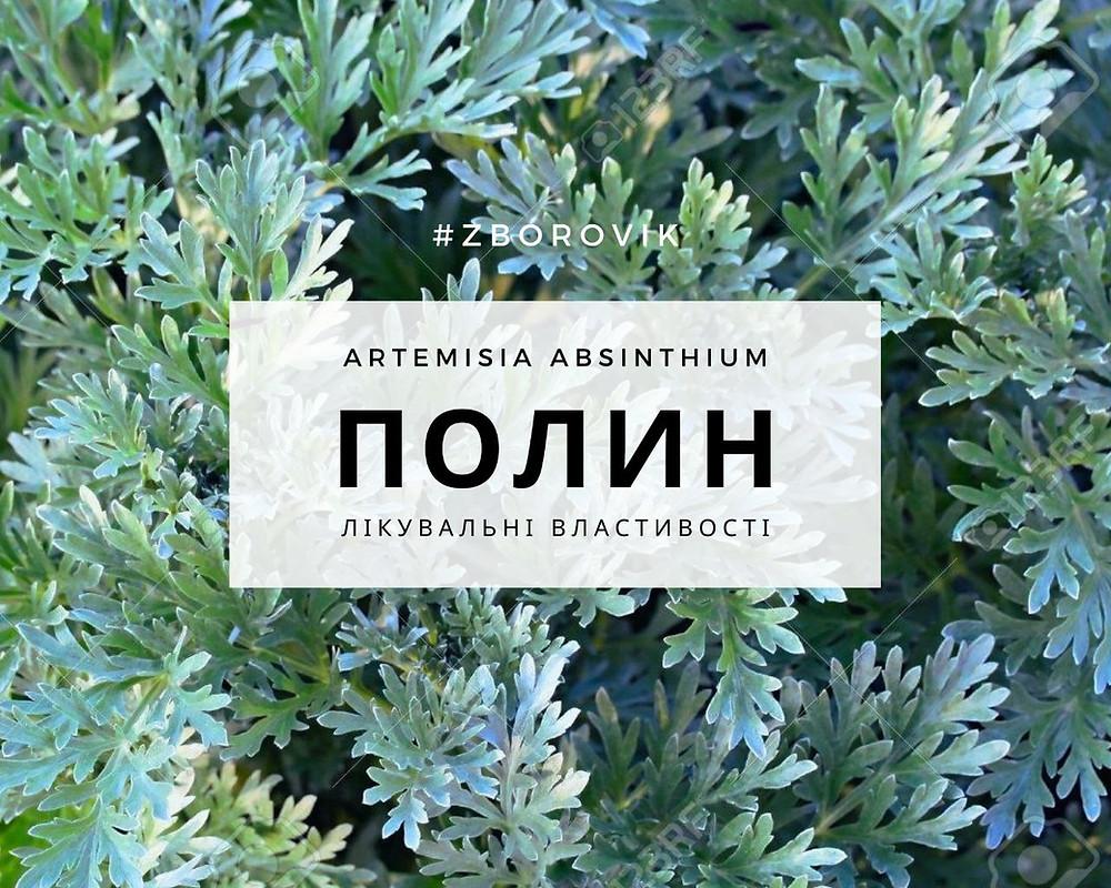 Полин - zborovik.com.ua