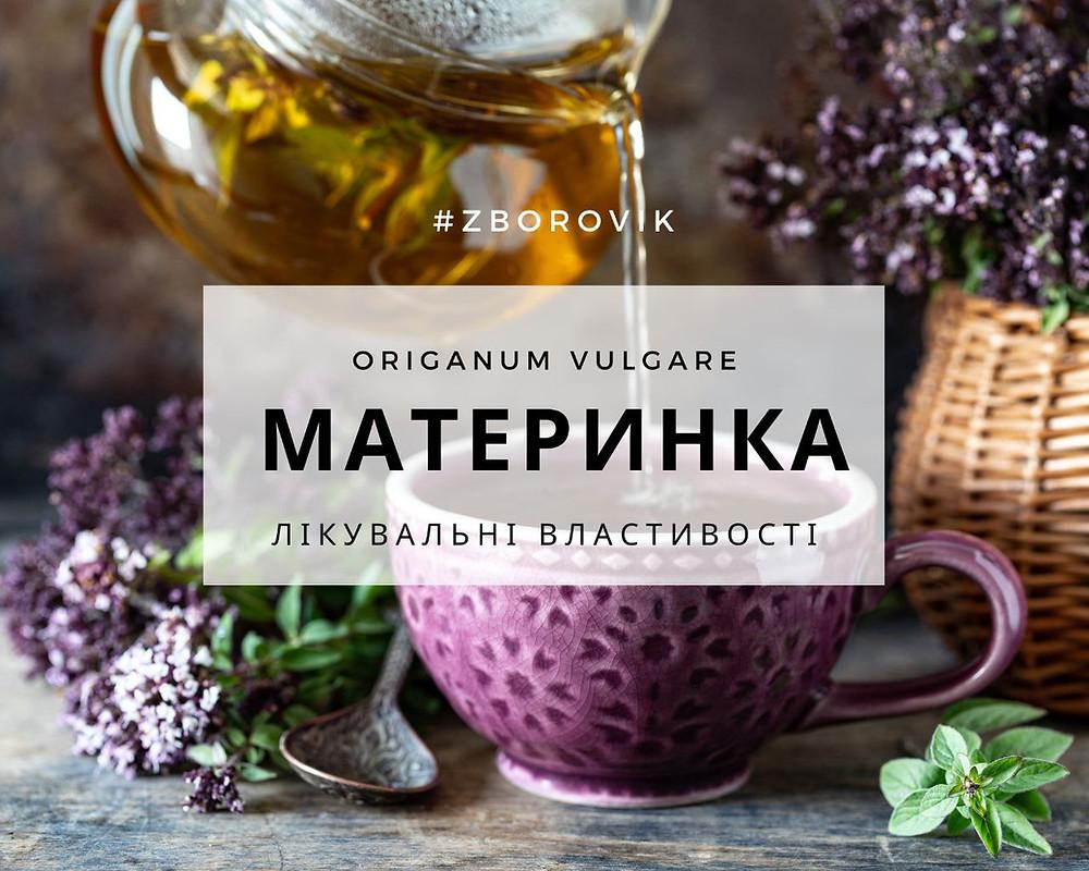 Душица - zborovik.com.ua