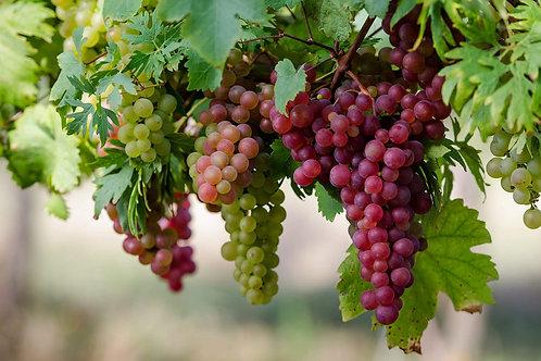 Гідролат винограду