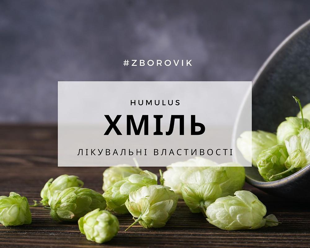 Хміль лікувальні властивості -  zborovik.com.ua