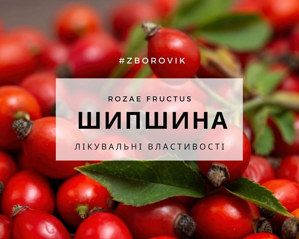 шипшина лікувальні властивості - zborovik.com.ua