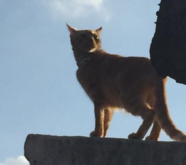 Ron: la sabiduría espiritual de un leoncito
