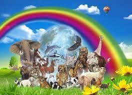 La eutanasia en los animales domésticos
