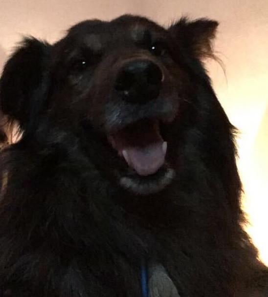 Oliver: el perro que sabía lo que quería