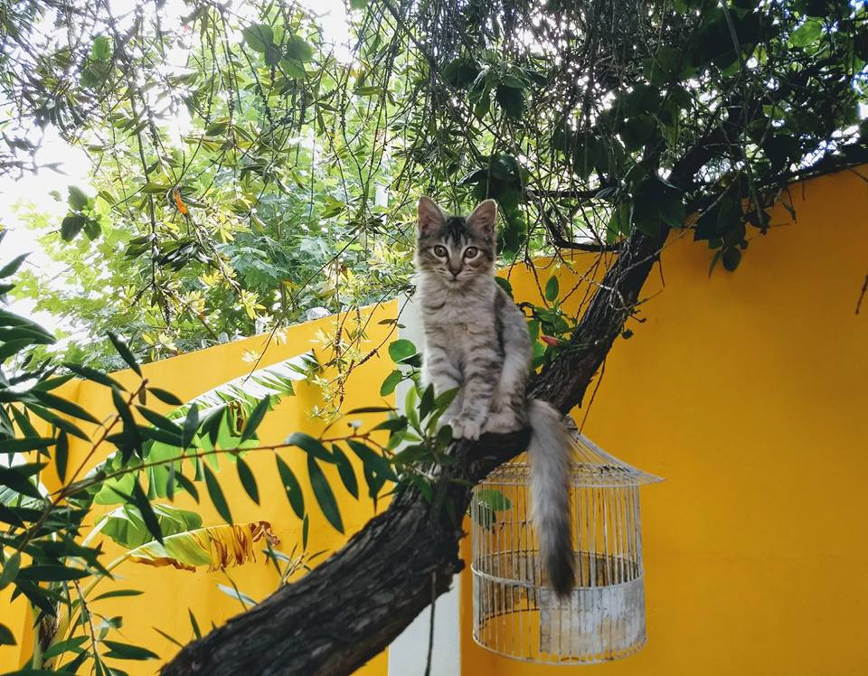 Gata sobre una rama