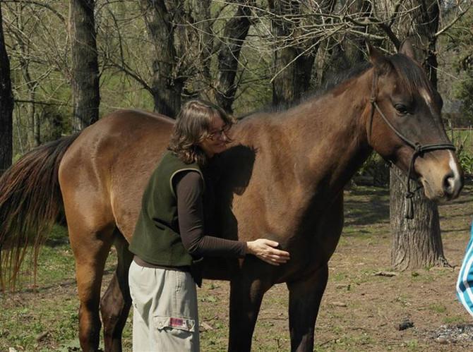 Los encuentros con caballos acarician el alma
