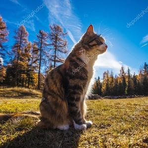 Algunas reflexiones sobre la vida de los animales (y los humanos) en la tierra (o de gatos que se va