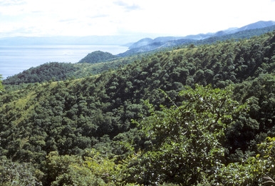View across the lush valleys of Gombe Stream National Park with Lake Tanganyika to the west. Home now to approximately one hundred chimpanzees. Photo by Grant Heidrich, 1973.