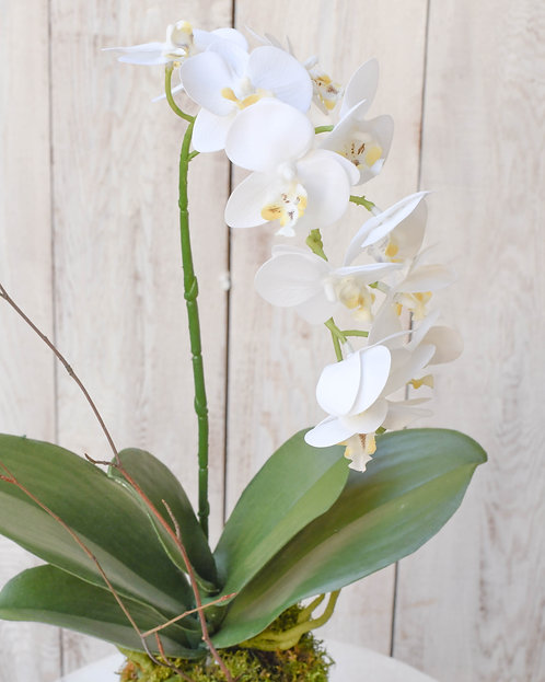 (Single) Tall Bloom Orchid Plant ~ $45