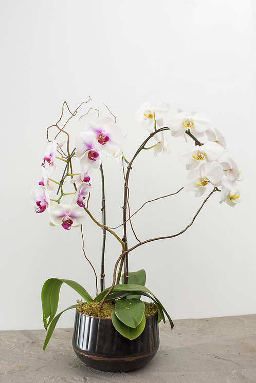 Orchids ~ From $45