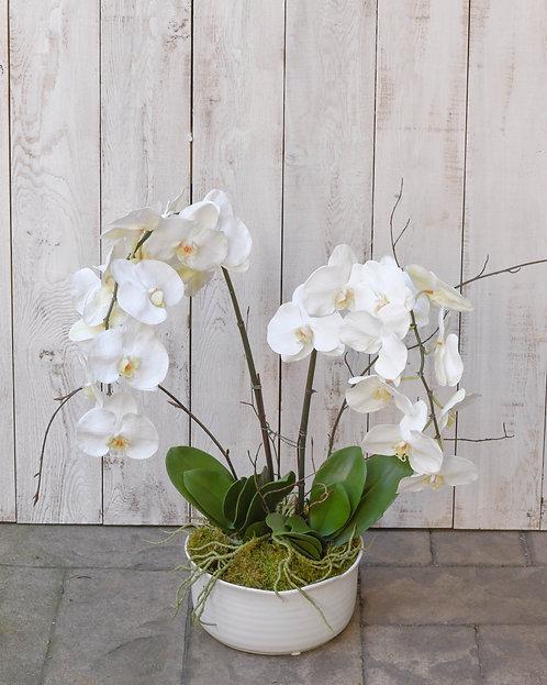 (Double) Orchid Planter ~ $179