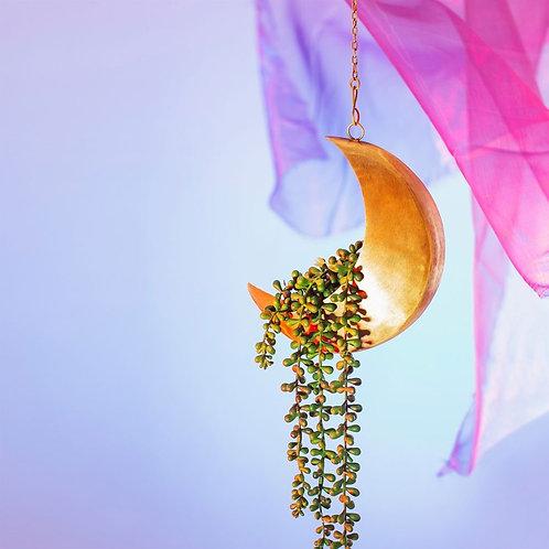 Moon planter hanging