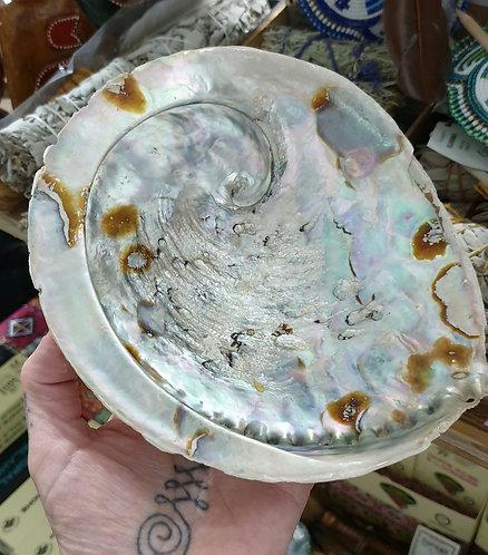 Extra Large abalone shell
