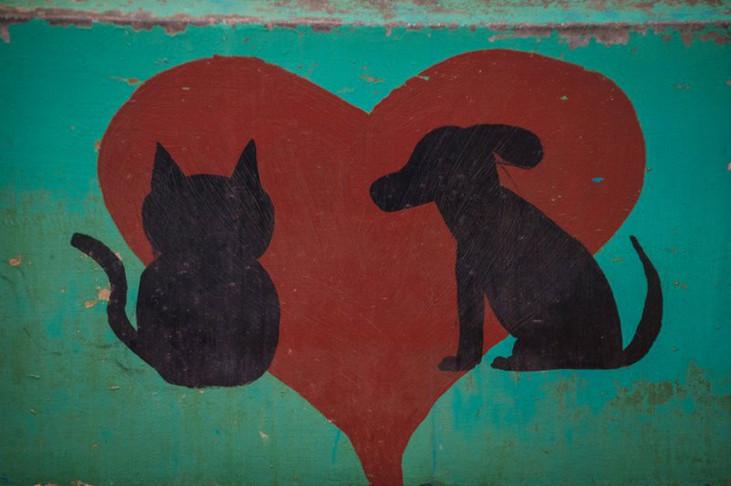 Koh Lanta Animal Welfare
