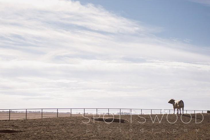 Underwood Livestock Farm, Nebraska