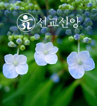 민족종교-선교-(2).jpg