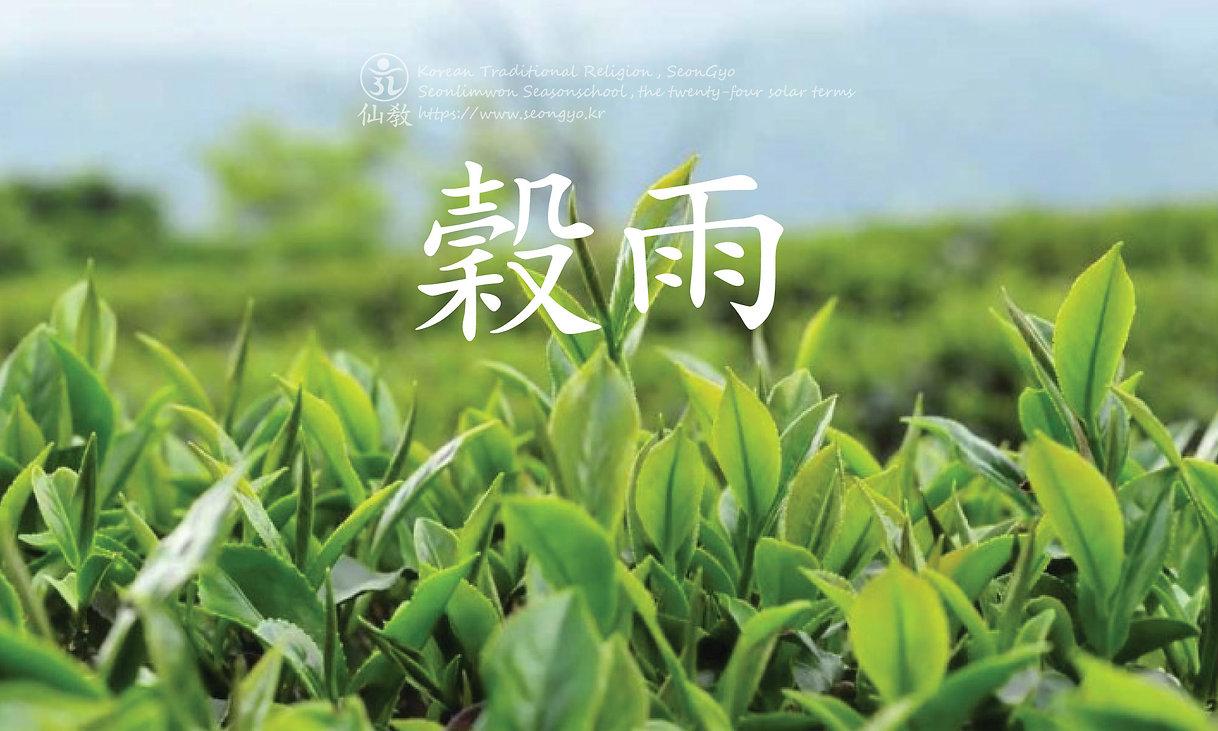 곡우-穀雨-24절기-선도수행-선교총림-선림원-선교-仙敎.jpg