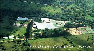 farm_crocodiles.jpg