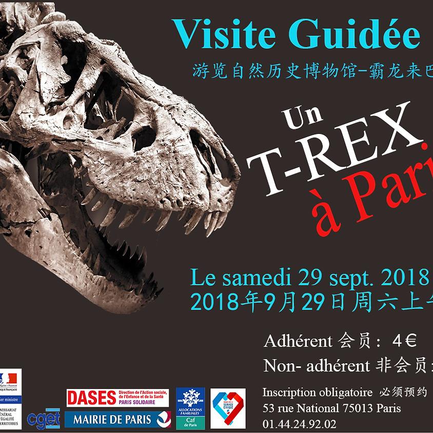 Visite au Musée d'Histoire Naturelle 参观自然历史博物馆