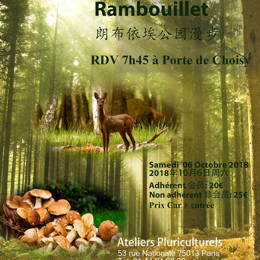 Balade au Parc de Rambouillet 朗布依埃公园漫步 (1)