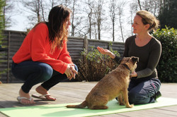 canine dog physio massage