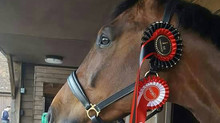 Physiotherapy for the Performance Horse