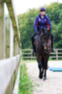 equine horse physio