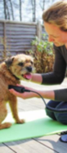 canine dog physio