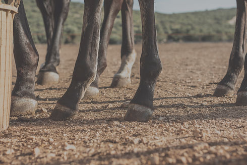 alfalfa-para-caballos_edited.jpg