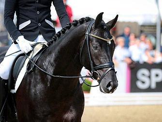entrenamiento-deportivo-caballos-alfalfa