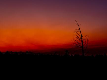 Bend, Oregon - Burned Tree Silhouette Against a Deep Orange Sunset Sky