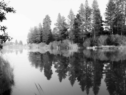 Bend Oregon - Black and White of Trees Reflecting on Smooth Deschutes River