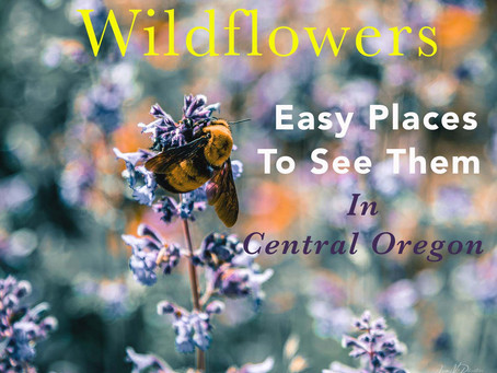 5 Easy Places To See Wildflowers in Central Oregon