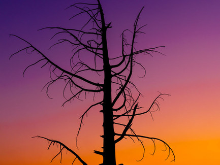 Bend, Oregon - Lonely Tree Silhouette