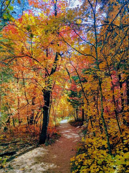 Sedona Arizona trail through colorful trees during Fall