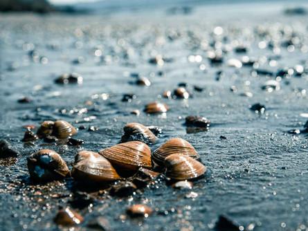 Columbia River - Shells On a Wet Sandy Beach