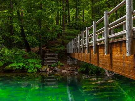 Clear Lake, Oregon - Green McKenzie River Headwaters with Wooden Bridge