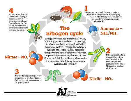 Nitrogen_Cycle_AlternativesJournal.png