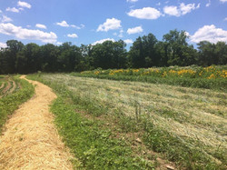 Straw Mulch, Crimped Cover Crop, and Pollinator Tract