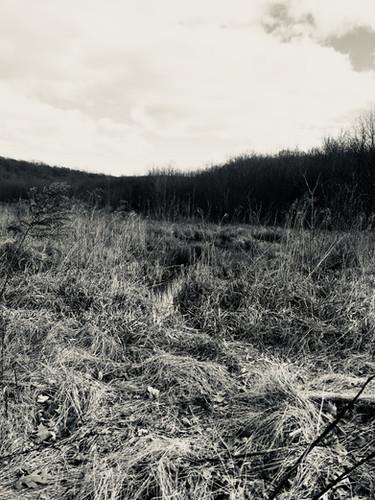 Knotty Landscape.jpg