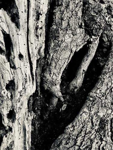 Detail of Elephant Tree.jpg