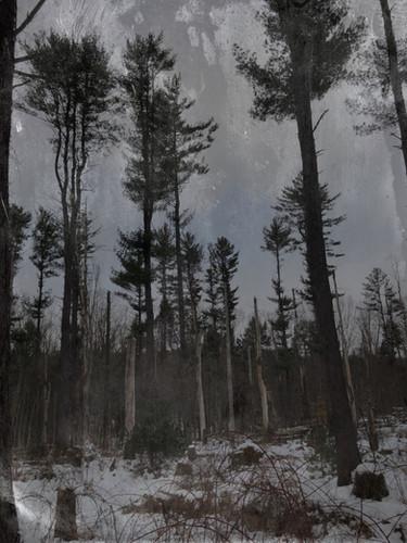 Winter Forest.jpg