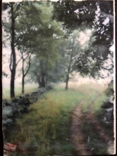 The Bridle Trail.jpg