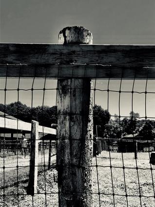 From the Farm.jpg
